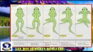Mouvement reflexes partie ii
