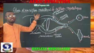 Reflexe medullaire